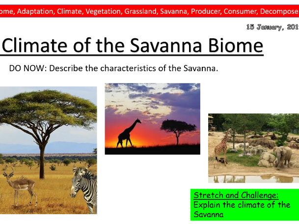 Geography Lesson- Ecosystems- Savanna- Sustainability