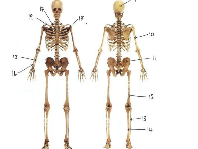 GCSE Bones and Muscles Orienteering Game