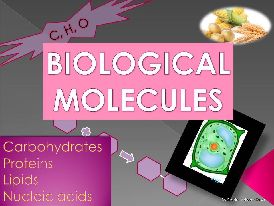 Edexcel IGCSE Biological molecules ppt