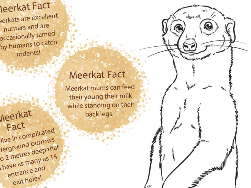 Meerkat Adaptation colouring worksheet