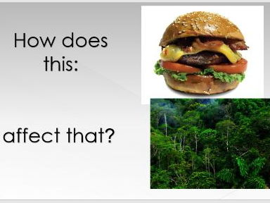 'Who's chopping down the TRF and why?' - Rainforest GCSE causes of deforestation