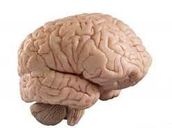 NEW AQA BIOLOGY, THE BRAIN :  A NEW LESSON MODEL BASED ON THE ABILITY OF THE BRAIN TO LEARN