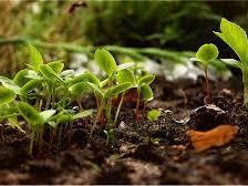 Horticulture/Gardening Workbooks