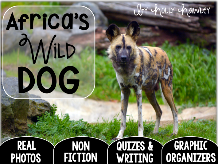 African WILD DOG-A Research Project- US and UK Version COMBO
