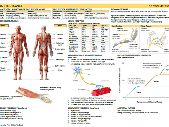 Anatomy & Physiology: Five Graphic  Organisers
