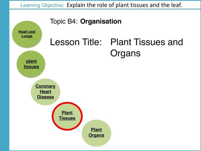 AQA GCSE: B4 Organisation: L4 Plant Tissues