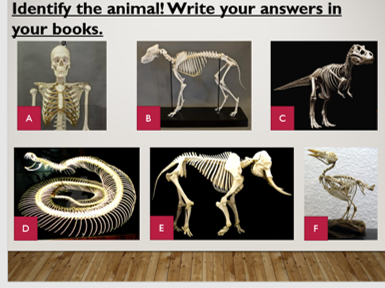 biology teaching resources: organ systems | tes, Skeleton