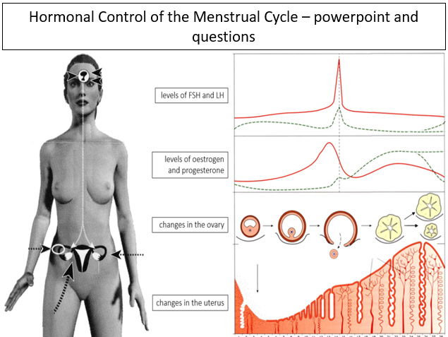 Hormonal Control of the Menstrual Cycle - powerpoint and questions