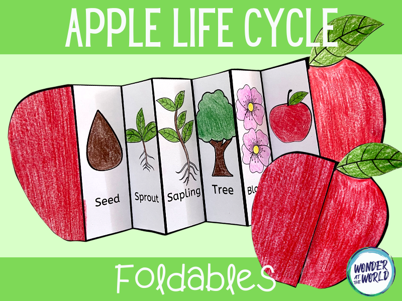 Apple life cycle foldables