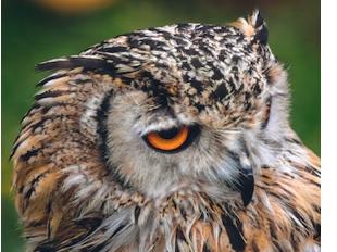 Nocturnal Animals - Fun Facts & FAQ
