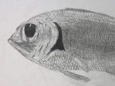 TONAL FISH DRAWING