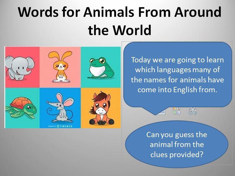 Words from Around the World: ANIMALS