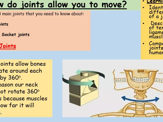 Joints of the Skeleton KS3