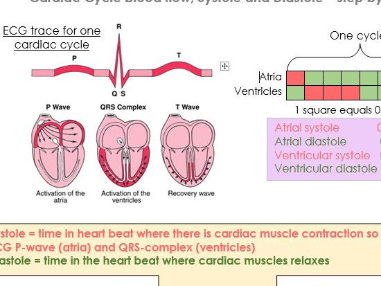 OCR A'Level Health and Social Care Unit 12 Anatomy and Physiology Cardiovascular System