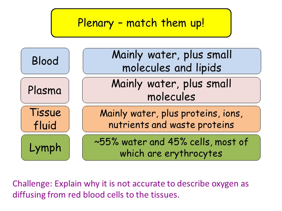 7.6 Blood vessels, tissue fluid and lymph A-level biology NEW OCR specification