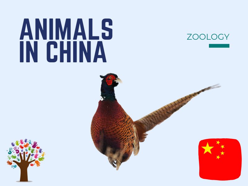 Montessori cards: Animals in China