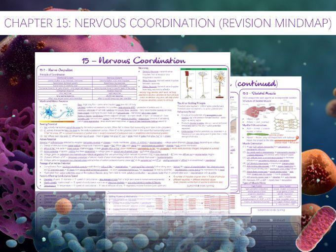 AQA A-Level - Biology : 15 - Nervous Coordination (Revision Mindmap)