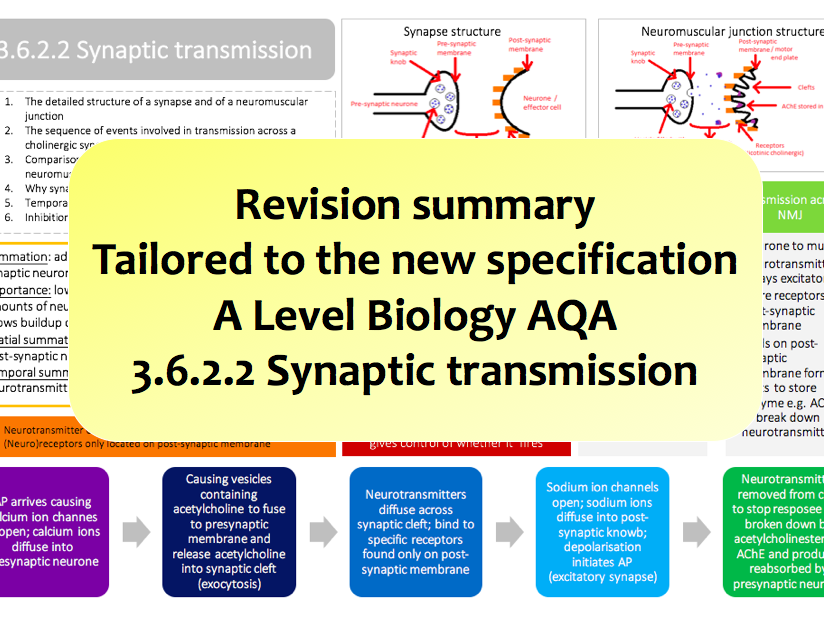 3.6.2.2 Synaptic transmission   NEW A Level Biology colourful revision summary   AQA