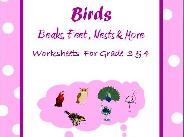Birds Adaptations - Beaks, Feet, Nests and More