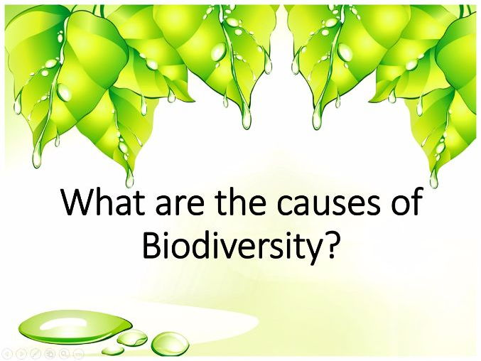 What are the causes of biodiversity?