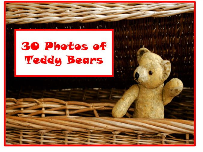 30 Teddy Bear Photos PowerPoint Presentation