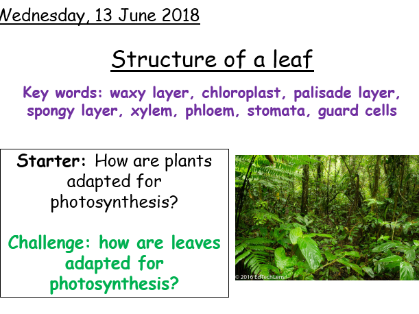 Structure of a leaf - Year 8 Activate science