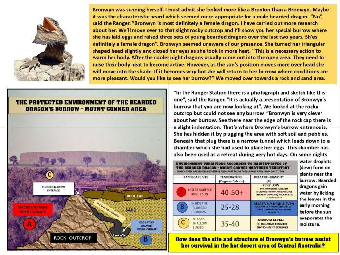 ANIMAL ODDITIES PART 3 - BRONWYN  THE BEARDED DRAGON OF THE AUSTRALIAN DESERT