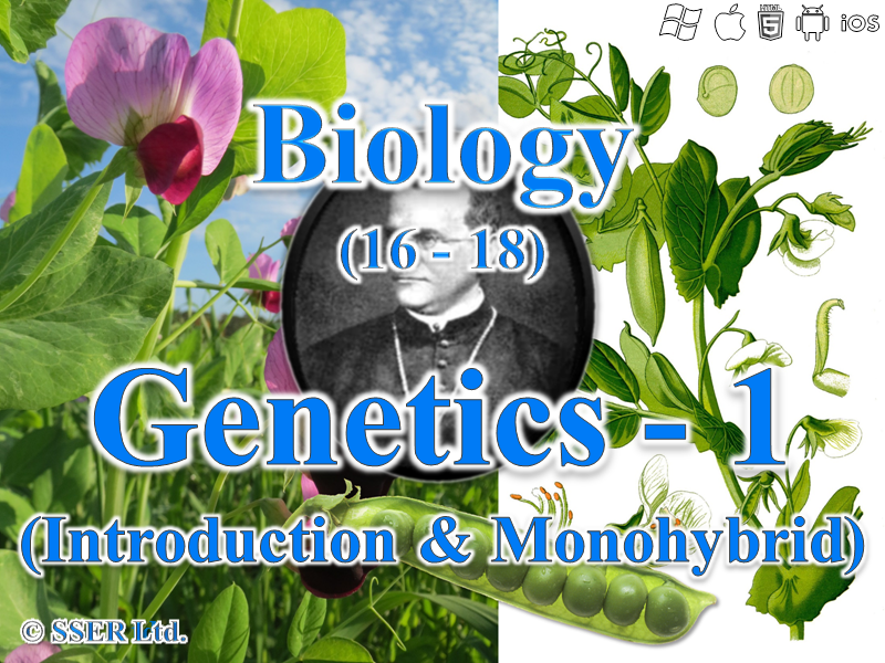 3.7.1 Genetics 1 - Introduction & Monohybrid