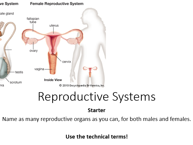 AQA Activate 1 Reproductive Systems (Including worksheets and markscheme)