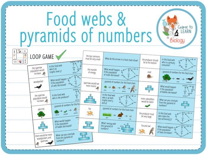 Ecology Food Webs and Pyramid of Numbers - Loop Game (KS3/4)