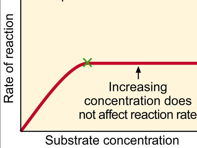 Factors that effect the rate of an enzyme-catalysed reaction