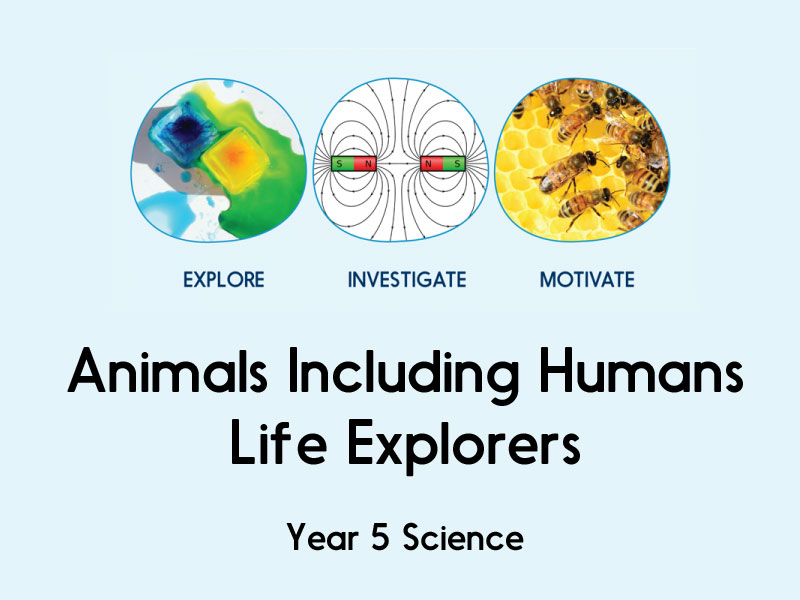 Image result for Animals including humans y5