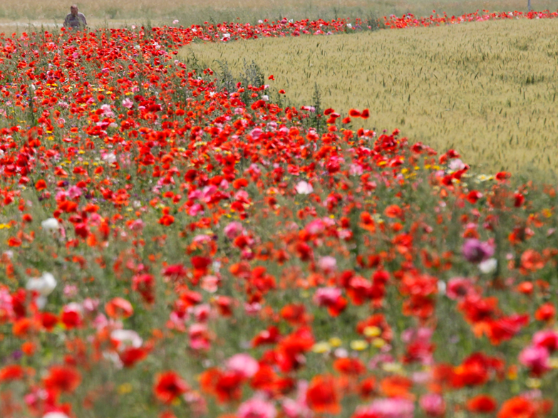 WJEC/Eduqas Poetry Anthology: The Soldier by Rupert Brooke