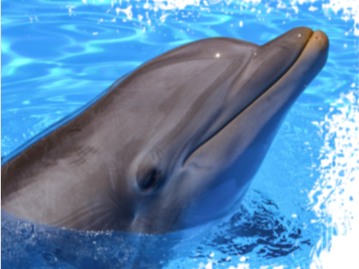 Dolphins in Captivity Resources