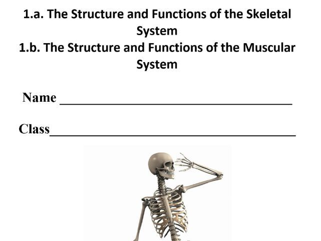 New OCR 9-1 GCSE. 1.a/1.b Musculo-Skeletal System. Pupil Workbook & Answer Booklet.