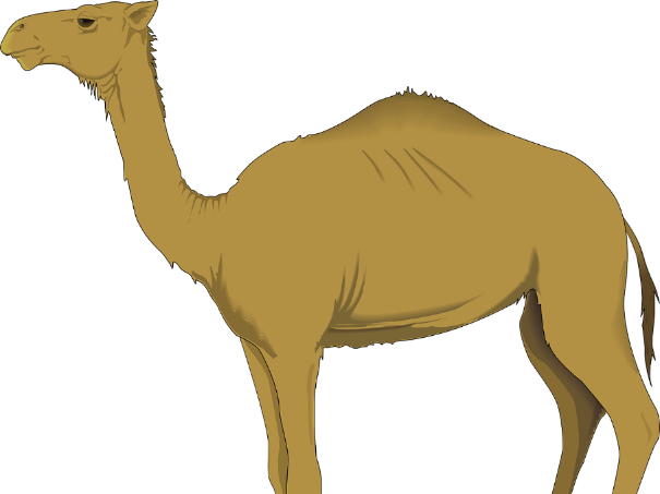 Montessoir Nomenclature Cards: Parts of an Arabian Camel