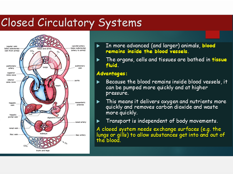 OCR A Level Biology (H020) Module 3 - Blood Vessels