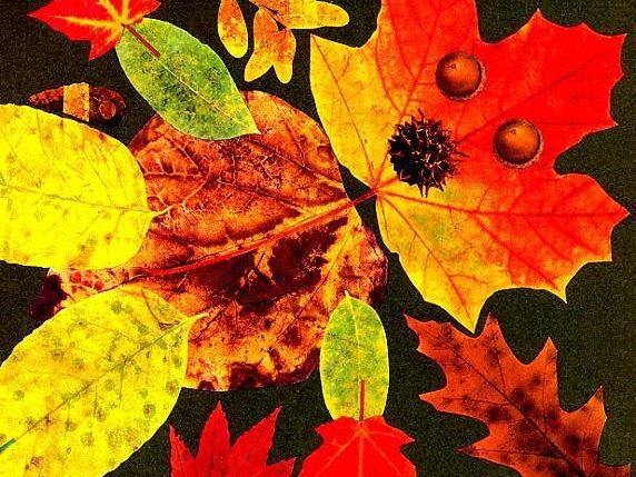 Leaf Man planning KS1
