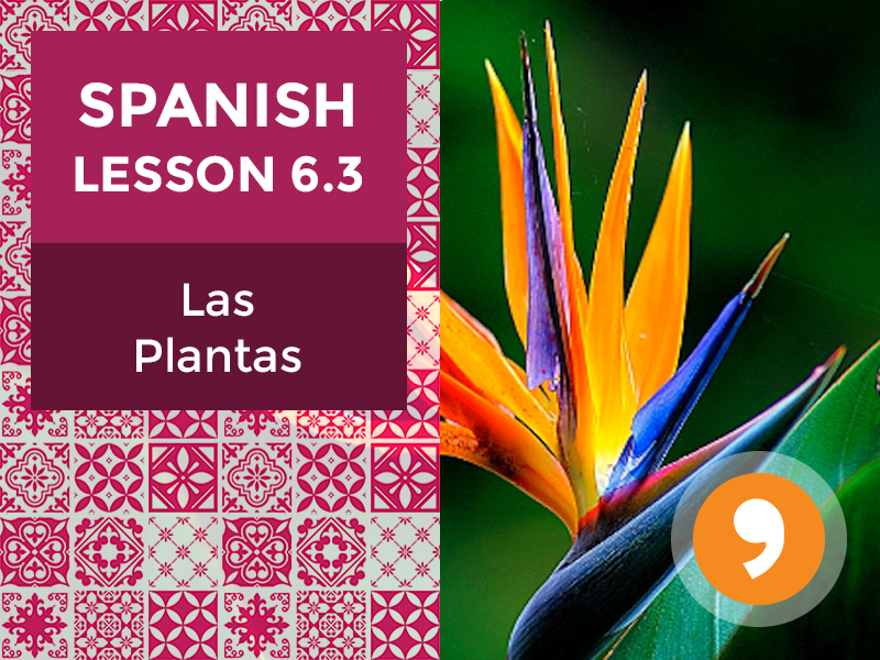 Spanish Lesson 6.3: Las Plantas - Plants