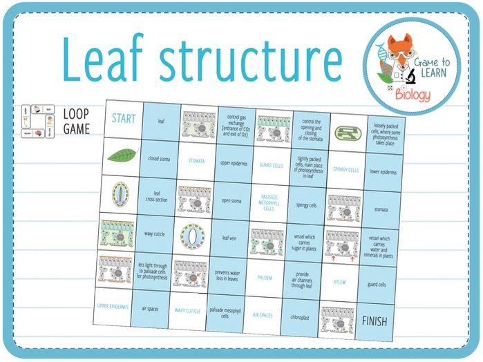 Leaf structure - Loop Game (KS3/4)