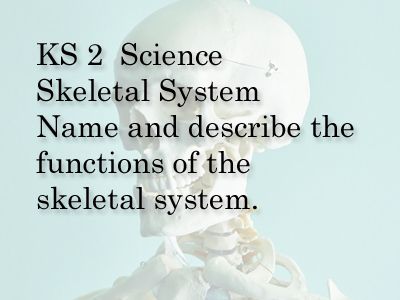 science  ks2 , ks3. skeletal system