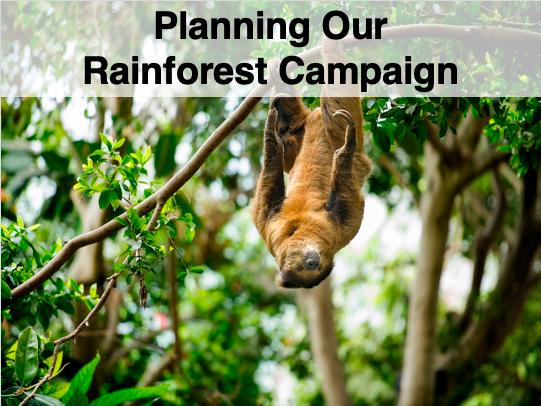 Rainforest Campaign - Management - Sustainable - Whole Lesson