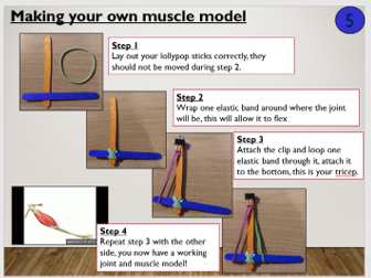 KS3 Joints and movement