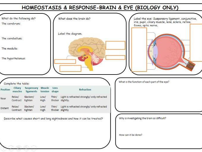 New Spec AQA GCSE Biology 4.5 Homeostasis & Response Revision Pack