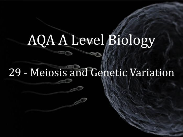 AQA A Level Biology Lecture 29 - Meiosis and Genetic Variation