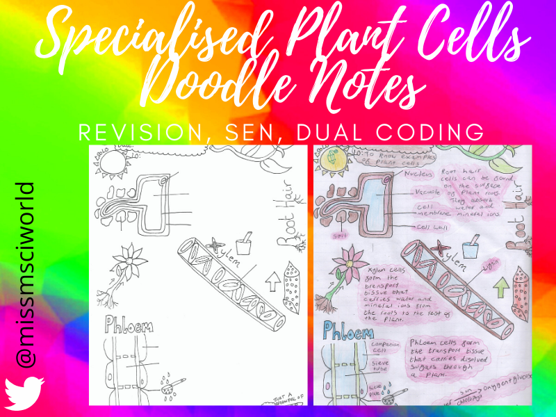 Specialised Plant Cells Science Doodle Note