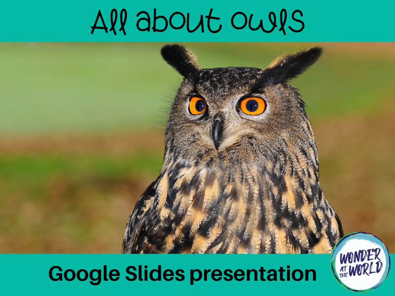 All about owls Google Slides presentation