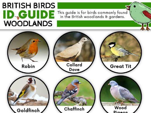 British Woodland and Garden Birds ID Guide