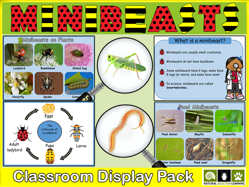 Minibeasts Classroom Display Pack KS1