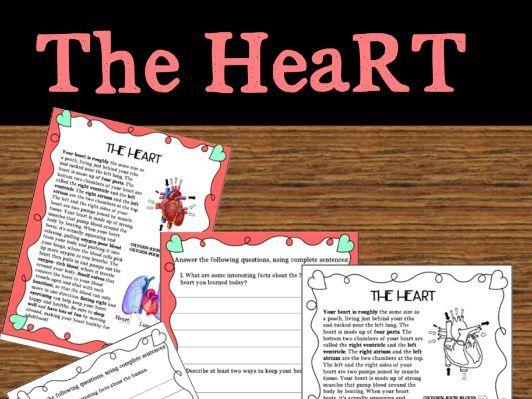 Human heart activity